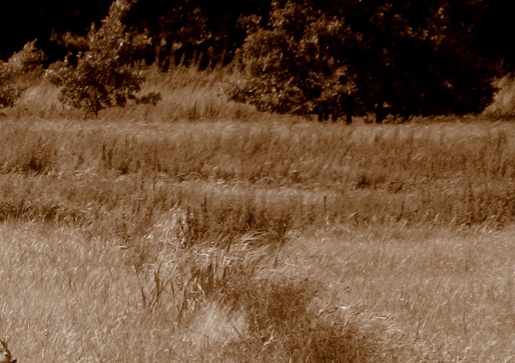 Spot the bambi
