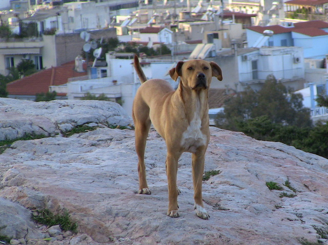 Dogs in Hellas by Heidenstrom