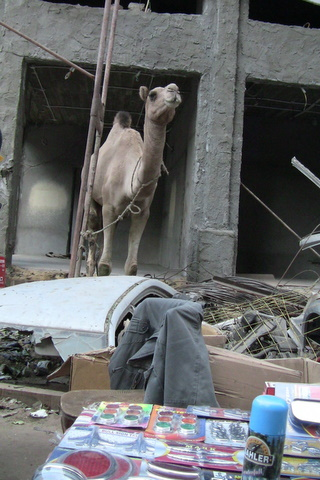 The urban Camel by Heidenstrom via; www.bjornheidenstrom.blogspot.com