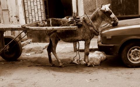 Donkey by Heidenstrom