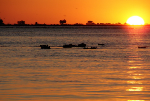 sun and hippos in Botswana by Heidenstrom