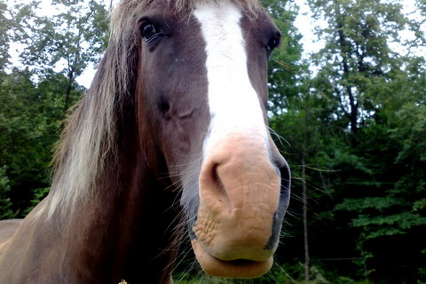 Very handsome Norwegian Horse by Heidenstrom